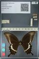 http://mczbase.mcz.harvard.edu/specimen_images/ent-lepidoptera/images/2012_10_27/IMG_133475.JPG