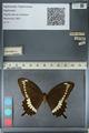 http://mczbase.mcz.harvard.edu/specimen_images/ent-lepidoptera/images/2012_10_27/IMG_133477.JPG