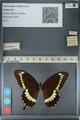 http://mczbase.mcz.harvard.edu/specimen_images/ent-lepidoptera/images/2012_10_27/IMG_133478.JPG