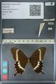 http://mczbase.mcz.harvard.edu/specimen_images/ent-lepidoptera/images/2012_10_27/IMG_133481.JPG