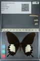 http://mczbase.mcz.harvard.edu/specimen_images/ent-lepidoptera/images/2012_10_27/IMG_133483.JPG