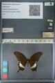 http://mczbase.mcz.harvard.edu/specimen_images/ent-lepidoptera/images/2012_10_27/IMG_133484.JPG