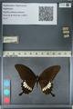 http://mczbase.mcz.harvard.edu/specimen_images/ent-lepidoptera/images/2012_10_27/IMG_133485.JPG