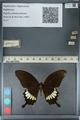 http://mczbase.mcz.harvard.edu/specimen_images/ent-lepidoptera/images/2012_10_27/IMG_133486.JPG
