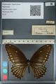 http://mczbase.mcz.harvard.edu/specimen_images/ent-lepidoptera/images/2012_10_27/IMG_133491.JPG