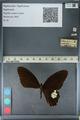 http://mczbase.mcz.harvard.edu/specimen_images/ent-lepidoptera/images/2012_10_27/IMG_133494.JPG