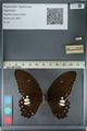 http://mczbase.mcz.harvard.edu/specimen_images/ent-lepidoptera/images/2012_10_27/IMG_133495.JPG