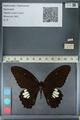 http://mczbase.mcz.harvard.edu/specimen_images/ent-lepidoptera/images/2012_10_27/IMG_133496.JPG