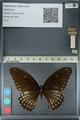 http://mczbase.mcz.harvard.edu/specimen_images/ent-lepidoptera/images/2012_10_27/IMG_133516.JPG