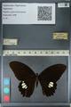 http://mczbase.mcz.harvard.edu/specimen_images/ent-lepidoptera/images/2012_10_27/IMG_133517.JPG