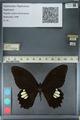 http://mczbase.mcz.harvard.edu/specimen_images/ent-lepidoptera/images/2012_10_27/IMG_133518.JPG
