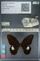 http://mczbase.mcz.harvard.edu/specimen_images/ent-lepidoptera/images/2012_10_27/IMG_133519.JPG