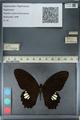 http://mczbase.mcz.harvard.edu/specimen_images/ent-lepidoptera/images/2012_10_27/IMG_133520.JPG