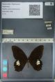 http://mczbase.mcz.harvard.edu/specimen_images/ent-lepidoptera/images/2012_10_27/IMG_133521.JPG