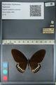 http://mczbase.mcz.harvard.edu/specimen_images/ent-lepidoptera/images/2012_10_27/IMG_133530.JPG