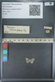 http://mczbase.mcz.harvard.edu/specimen_images/ent-lepidoptera/images/2012_11_18/IMG_136256.JPG