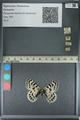 http://mczbase.mcz.harvard.edu/specimen_images/ent-lepidoptera/images/2013_01_04/IMG_136961.JPG