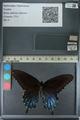 http://mczbase.mcz.harvard.edu/specimen_images/ent-lepidoptera/images/2013_02_22/IMG_137284.JPG