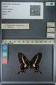 http://mczbase.mcz.harvard.edu/specimen_images/ent-lepidoptera/images/2013_02_22/IMG_137297.JPG