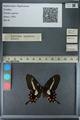 http://mczbase.mcz.harvard.edu/specimen_images/ent-lepidoptera/images/2013_02_22/IMG_137298.JPG