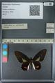 http://mczbase.mcz.harvard.edu/specimen_images/ent-lepidoptera/images/2013_02_22/IMG_137341.JPG