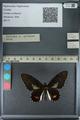http://mczbase.mcz.harvard.edu/specimen_images/ent-lepidoptera/images/2013_02_22/IMG_137342.JPG