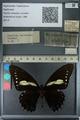 http://mczbase.mcz.harvard.edu/specimen_images/ent-lepidoptera/images/2013_02_22/IMG_137358.JPG