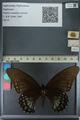 http://mczbase.mcz.harvard.edu/specimen_images/ent-lepidoptera/images/2013_02_22/IMG_137361.JPG