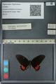 http://mczbase.mcz.harvard.edu/specimen_images/ent-lepidoptera/images/2013_02_26/IMG_137478.JPG
