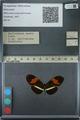 http://mczbase.mcz.harvard.edu/specimen_images/ent-lepidoptera/images/2013_03_08/IMG_138308.JPG