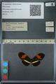 http://mczbase.mcz.harvard.edu/specimen_images/ent-lepidoptera/images/2013_03_08/IMG_138309.JPG