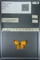 http://mczbase.mcz.harvard.edu/specimen_images/ent-lepidoptera/images/2013_03_11/IMG_138911.JPG
