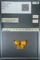 http://mczbase.mcz.harvard.edu/specimen_images/ent-lepidoptera/images/2013_03_11/IMG_138912.JPG