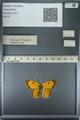 http://mczbase.mcz.harvard.edu/specimen_images/ent-lepidoptera/images/2013_03_11/IMG_138913.JPG