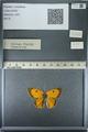 http://mczbase.mcz.harvard.edu/specimen_images/ent-lepidoptera/images/2013_03_11/IMG_138914.JPG