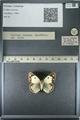 http://mczbase.mcz.harvard.edu/specimen_images/ent-lepidoptera/images/2013_03_12/IMG_138943.JPG