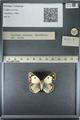 http://mczbase.mcz.harvard.edu/specimen_images/ent-lepidoptera/images/2013_03_12/IMG_138944.JPG