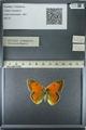 http://mczbase.mcz.harvard.edu/specimen_images/ent-lepidoptera/images/2013_03_12/IMG_138950.JPG