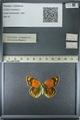 http://mczbase.mcz.harvard.edu/specimen_images/ent-lepidoptera/images/2013_03_12/IMG_138951.JPG