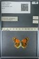 http://mczbase.mcz.harvard.edu/specimen_images/ent-lepidoptera/images/2013_03_12/IMG_138952.JPG