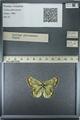 http://mczbase.mcz.harvard.edu/specimen_images/ent-lepidoptera/images/2013_03_12/IMG_138957.JPG