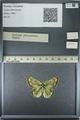 http://mczbase.mcz.harvard.edu/specimen_images/ent-lepidoptera/images/2013_03_12/IMG_138958.JPG