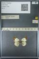 http://mczbase.mcz.harvard.edu/specimen_images/ent-lepidoptera/images/2013_03_12/IMG_138963.JPG