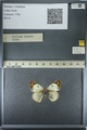 http://mczbase.mcz.harvard.edu/specimen_images/ent-lepidoptera/images/2013_03_12/IMG_138964.JPG
