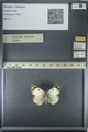http://mczbase.mcz.harvard.edu/specimen_images/ent-lepidoptera/images/2013_03_12/IMG_138965.JPG