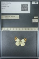 http://mczbase.mcz.harvard.edu/specimen_images/ent-lepidoptera/images/2013_03_12/IMG_138967.JPG