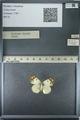 http://mczbase.mcz.harvard.edu/specimen_images/ent-lepidoptera/images/2013_03_12/IMG_138968.JPG