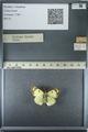 http://mczbase.mcz.harvard.edu/specimen_images/ent-lepidoptera/images/2013_03_12/IMG_138969.JPG