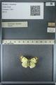 http://mczbase.mcz.harvard.edu/specimen_images/ent-lepidoptera/images/2013_03_12/IMG_138970.JPG