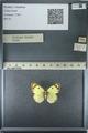 http://mczbase.mcz.harvard.edu/specimen_images/ent-lepidoptera/images/2013_03_12/IMG_138971.JPG